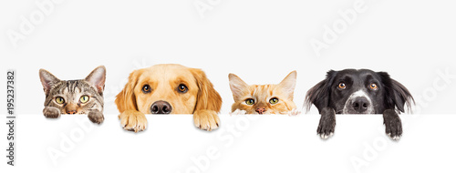 Poster de jardin Chat Dogs and Cats Peeking Over Web Banner