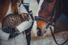 Cat On Hands And Horse