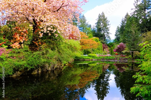 Fotobehang Bomen Pond with reflections in a beautiful garden with flowering trees during spring. Butchart Gardens, Victoria, Canada.