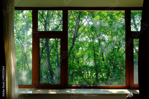 close-up of trees seen through window