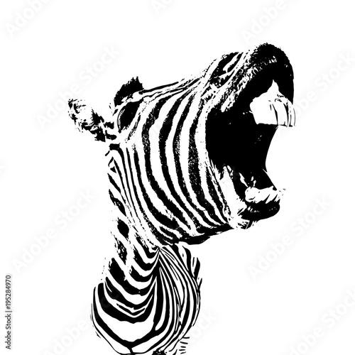 Poster Zebra vector image of zebra with open mouth and big teeth, funny lough concept