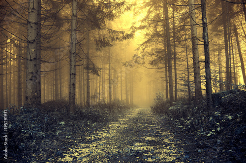 Fototapeten Wald Fantasy orange foggy forest with mystic light. Color filter effect used.