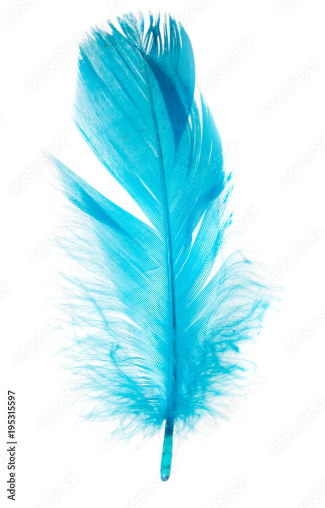 Beautiful blue feather on white background