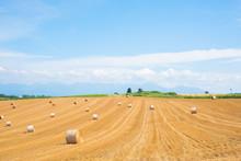 Hokkaido Paddy Field