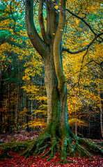 Panel Szklany Industrialny autumn tree