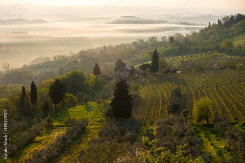 Spoed Foto op Canvas Wijngaard Typical Tuscan landscape