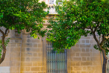 Orange Tree Next To Facade Of The Cathedral Of Jeres, Andalusia, Spain.