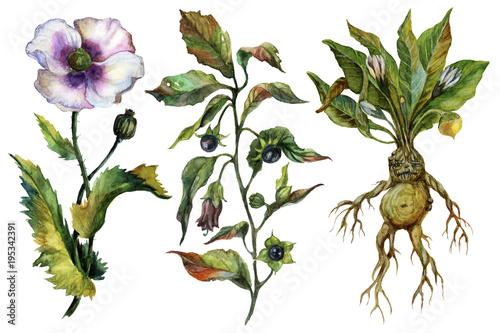 Watercolor attributes of alchemy. Medicinal herbs. - 195342391