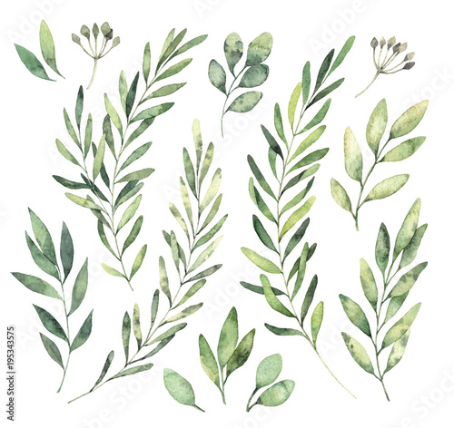 Hand drawn watercolor illustrations. Botanical clipart. Set of Green leaves, herbs and branches. Floral Design elements. Perfect for wedding invitations, greeting cards, blogs, posters and more Wall mural