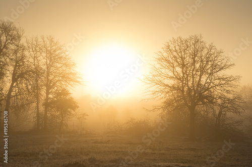 Fotografía  Foggy sunrise in golden tones in a rural pasture landscape
