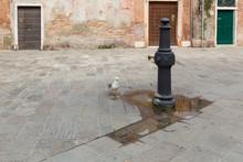 A Small Urban Fountain In Veni...