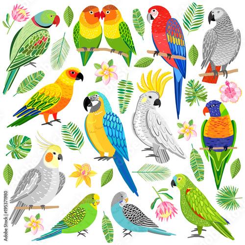 Fototapeta premium Ilustracja wektorowa papuga. Tropikalny ptak na białym tle
