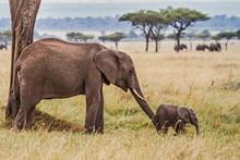 Elephant Mother Pushing Her Ba...