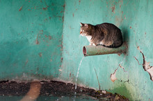 The Cat Sits On A Pipe With Water