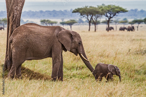 Fotobehang Olifant Elephant mother pushing her baby in Masai Mara National Park in Kenya