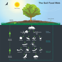 The Soil Food Web Diagram. Ill...