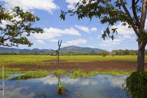 Foto op Aluminium Diepbruine beautiful sri lanka scenery
