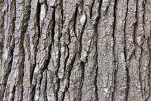 Close Up Of Bark Texture On A ...