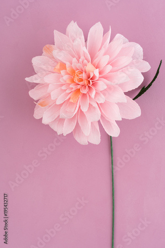 Tuinposter Dahlia Single pink crepe paper dahlia on pink wooden background