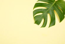 Tropical Palm Leaf On Yellow B...