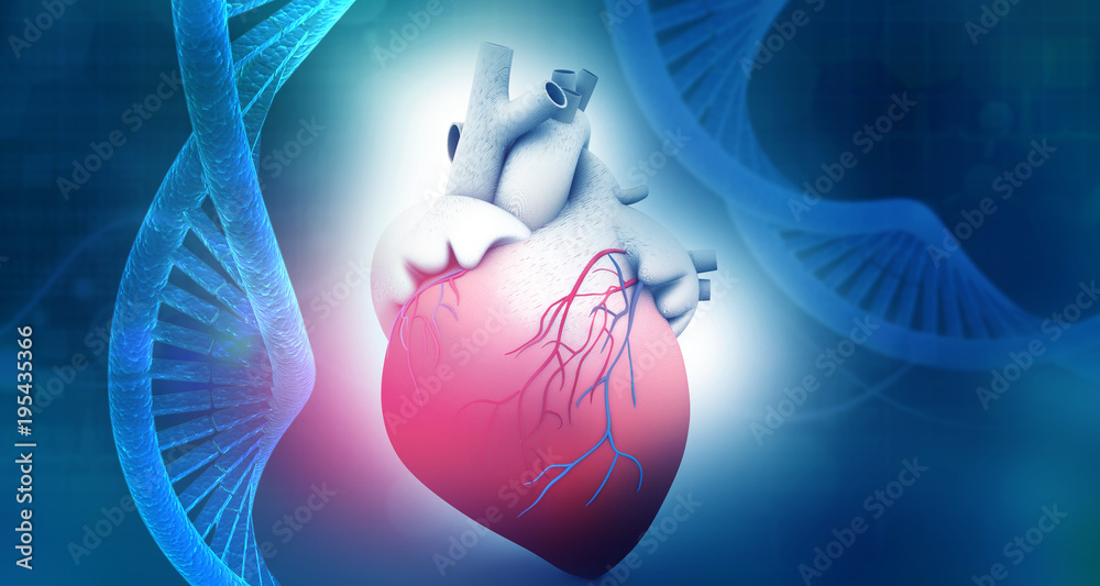 Photo Art Print Human Heart Anatomy With Dna Abstract