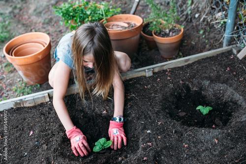 Fotografie, Obraz  Little girl planting vegetables