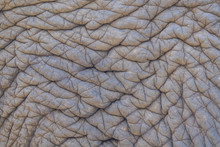 Elephant Skin Texture Or Backg...