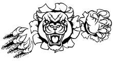 Black Panther Tiger Background Breakthrough