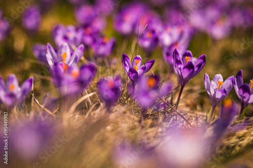 Spoed Foto op Canvas Natuur Spring in Tatra Mountains