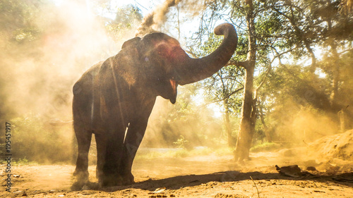 Photo wild elephant playing with sand in the jungle of thailand