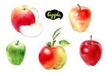 Apple Fruit Watercolor