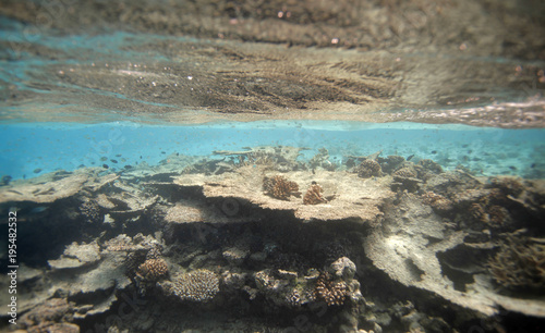 Foto op Aluminium Grijs Maldives underwater beautiful landscape with surface water line, with colorful coral reef on a sandy bottom, and bright blue water with visible horizon line in natural sunlight