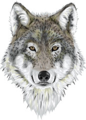 Realistic Vector Wolf