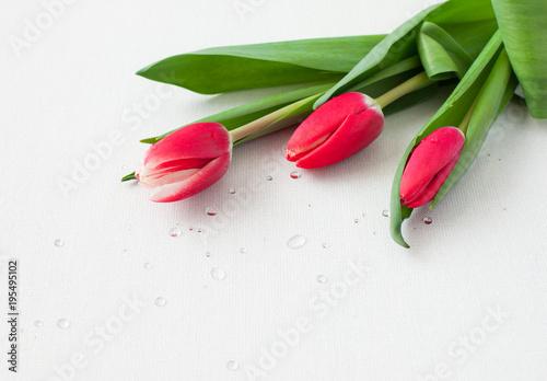 Fototapeta Tulips obraz na płótnie