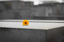 Flower In Memorial To The Murd...