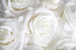 canvas print picture - White roses