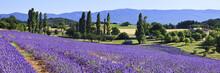 FRA/Provence, Valensole