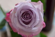 Close-up Of Light Purple Bloom...