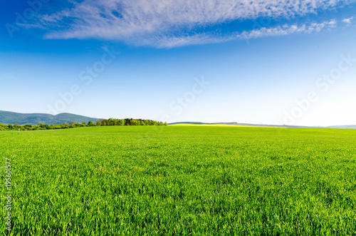 Foto op Aluminium Weide, Moeras green field and blue sky