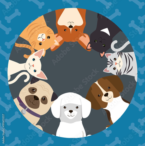 Photo  dogs and cats pets characters
