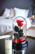 Red Rose In A Flask. Long-lasting Rose