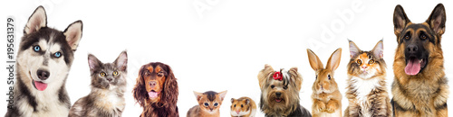 group of animals looking on a white background isolated © Happy monkey