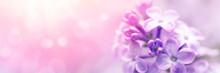 Lilac Flowers Spring Blossom