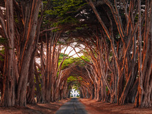 Stunning Cypress Tree Tunnel A...