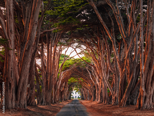 Stunning Cypress Tree Tunnel at Point Reyes National Seashore, California, United States. Trees colored red by the light of the setting sun.