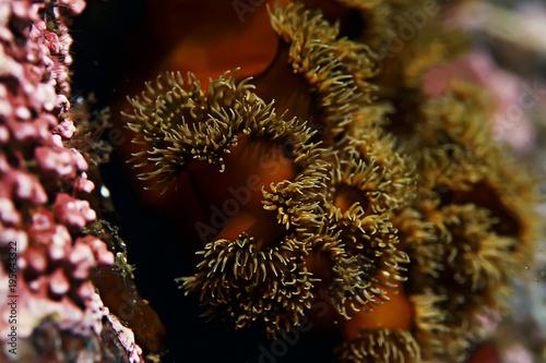 Staande foto Bruin underwater landscape