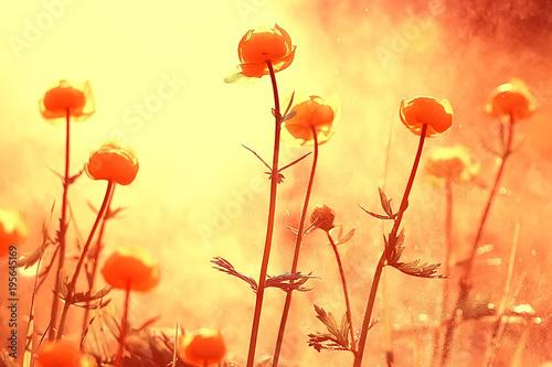 tlo-natura-zolte-kwiaty-wiosna-piekne-niewyrazne-tlo-wiosna-male-kwiaty-makro