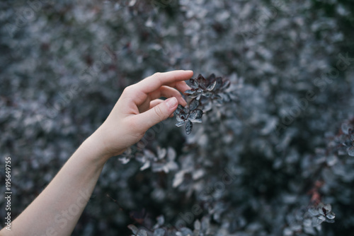 Fotografia  The hand of a young white European woman touches the branch of a plant