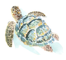 Watercolor Illustration Of A S...