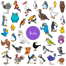 Cartoon Birds Animal Character...